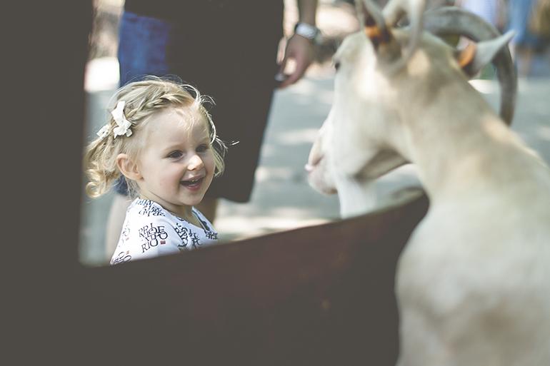 urodziny w zoo