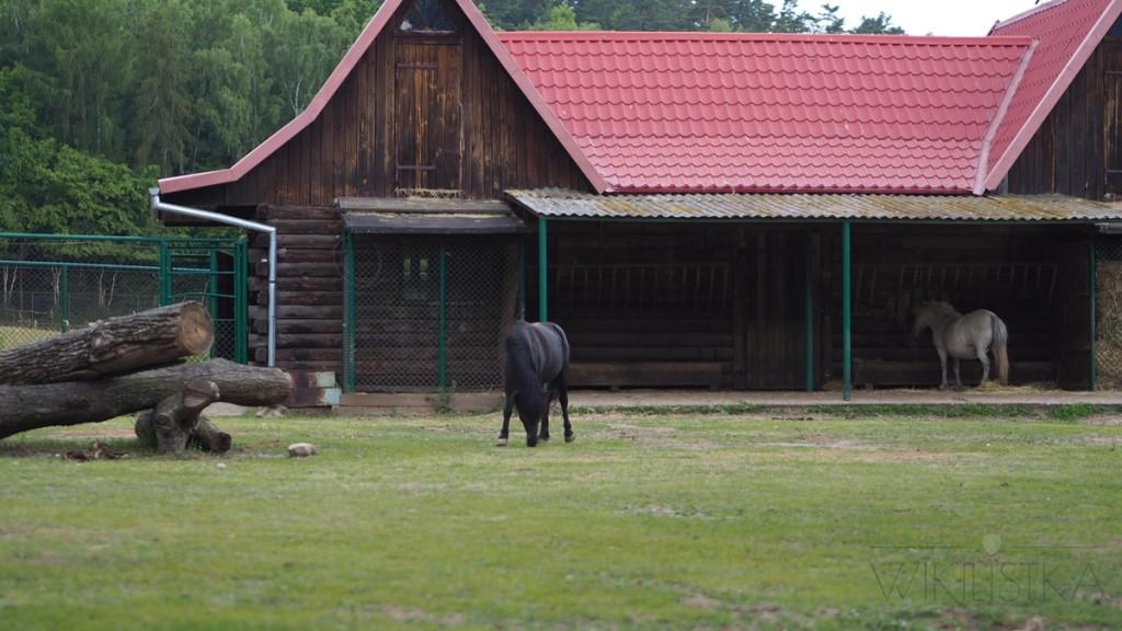 konie w zoo