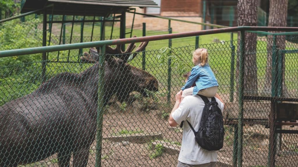 łoś w zoo