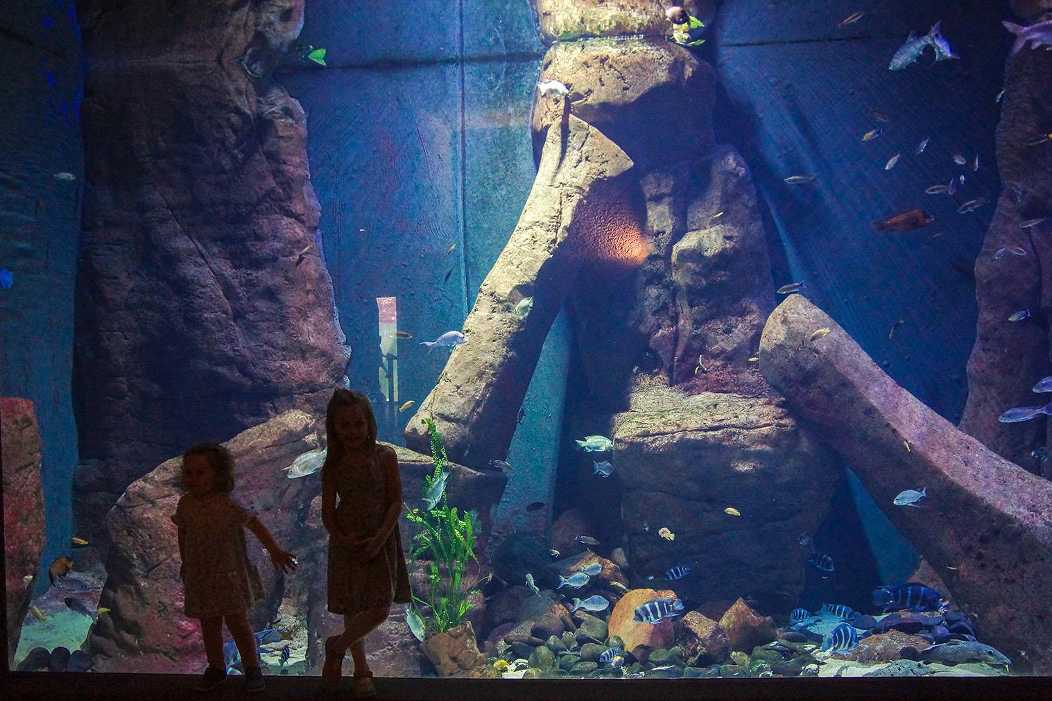 afrykarium wrocław, zoo