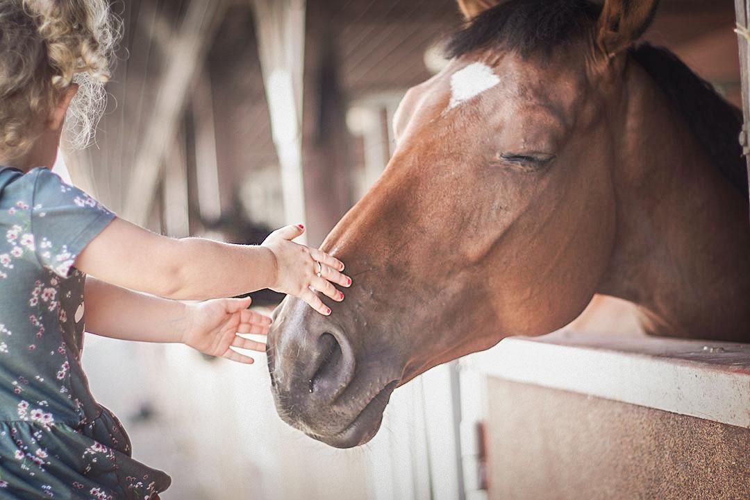 konie, koń, dziecko i koń, stadnina koni zbyszków