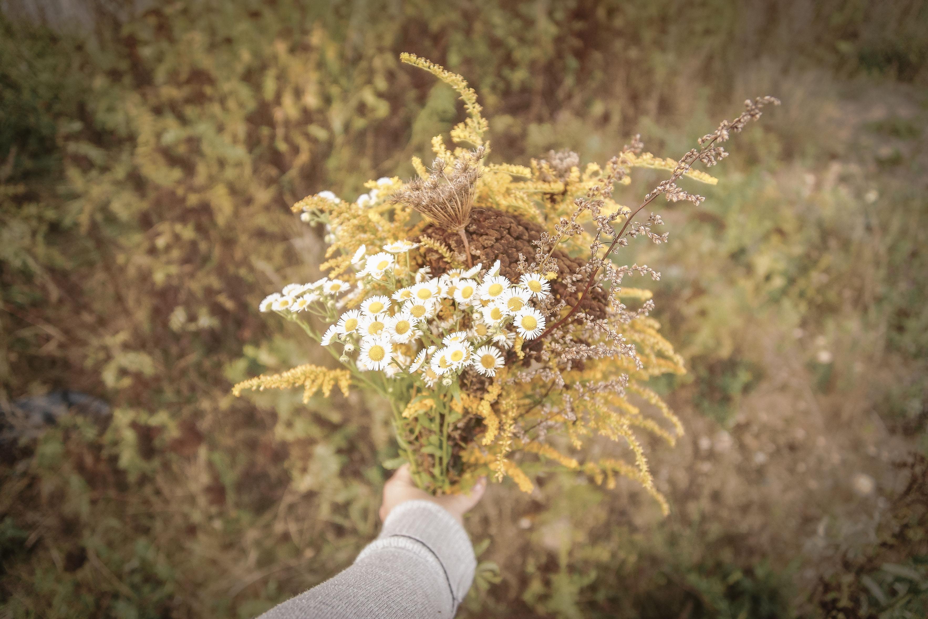 co warto zrobić jesienią, na jesień, jesienne kwiaty, bukiet polnych kwiatów, dzikie kwiaty